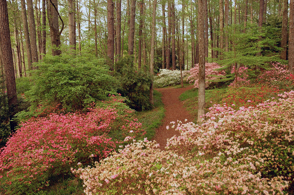 Callaway gardens visit columbus ga for Places to stay near callaway gardens