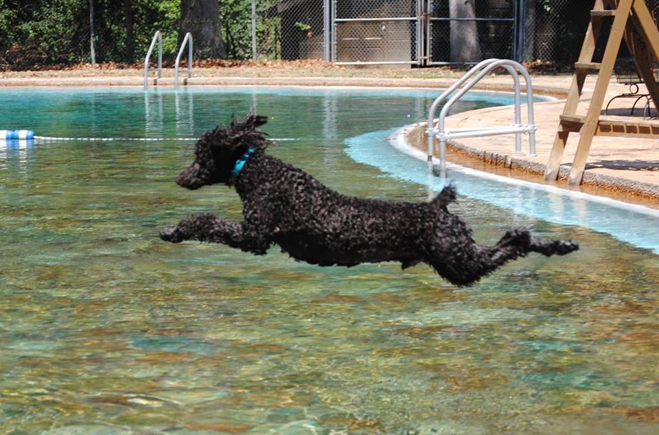 Dog Splash and Luau at the Liberty Bell Pool